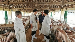 VinaCert audited and issued VietGAP livestock certificate for Tien Giang Livestock Breeding Company