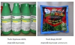 Remove glyphosate containing pesticides  from the List of permitted uses in Vietnam