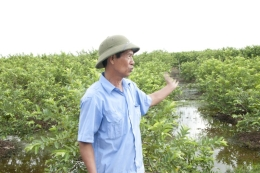 VinaCert audited VietGAP for guava at Dong Du Cooperative